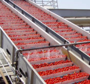 Vegetable Conveyor Thumbnail